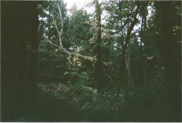 photos30-1